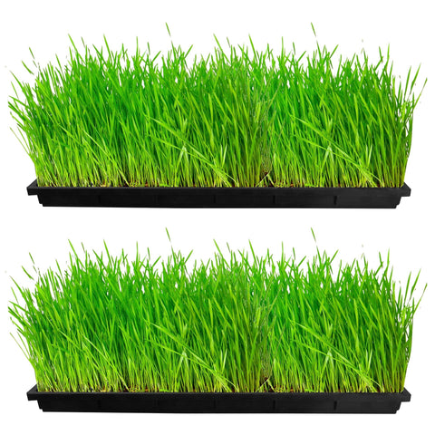 Plastic garden Pots - TrustBasket Wheat Grass Trays