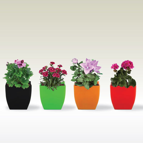 TrustBasket Daisy TableTop Flower Pots (Red, Black, Orange, Green) - Set of 4