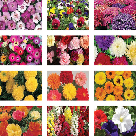 Seeds Combo Kits - Winter Flower Seeds Kit (Set of 12 Packets)