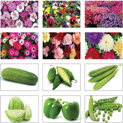 Seeds Combo Kits - Winter Vegetable and Flower Seeds Kit (Set of 12 Packets)