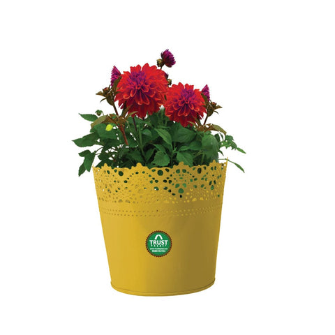 BEST INDOOR PLANT POTS ONLINE - HALF LACE FINISH YELLOW