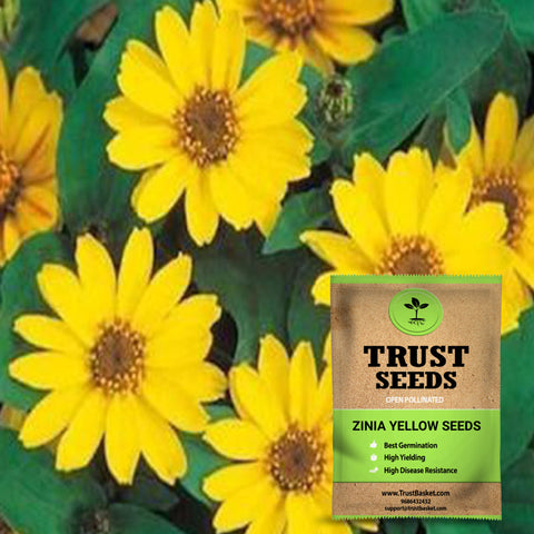 Buy Best Zinia Plant Seeds Online - Zinia yellow seeds (OP)