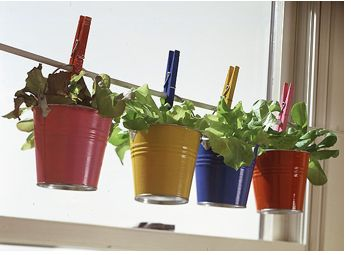Set of 5 Bucket Planter(Pink,Purple,Blue,Green,Yellow)