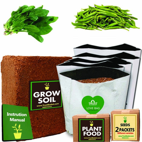 TrustBasket Economy Starter Grow Kit for Green Vegetables (Palak, Chilli Green)