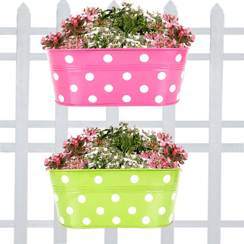 DECORATIVE/CONTEMPORARY PLANT POTS - Set Of 2-Dotted Oval Railing Planter-(Magenta, Green)
