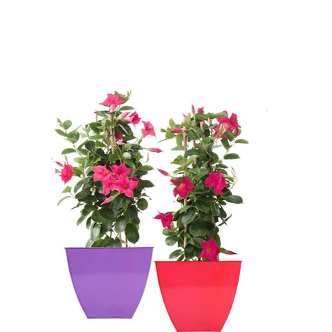 TrustBasket Set of 2 Colorful Floor Planter-Purple and Red (12 Inch)
