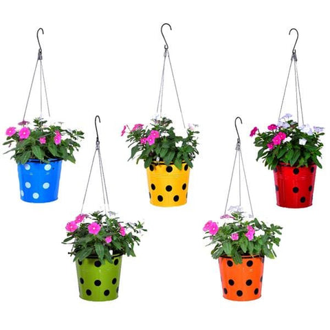 Hanging baskets, Hanging Pots & Planters in India - TrustBasket Dotted Round Planter with Hanging Wire Rope