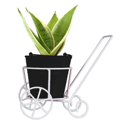 Sansevieria Plant and Bucket Planter with Trolley