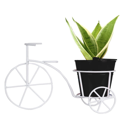 Sansevieria Plant and Bucket Planter with Bicycle
