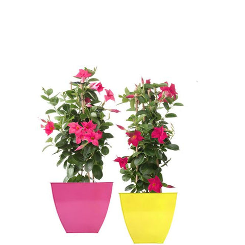 TrustBasket Set of 2 Colorful Floor Planter-Magenta and Yellow (12 Inch)