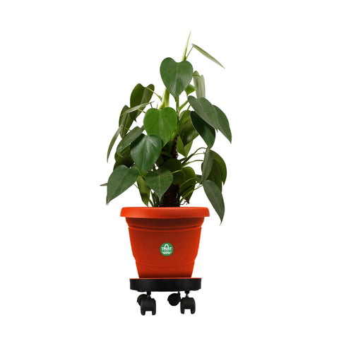 Movable Heavy Duty Trolley Pot Stand for Plants with 14 inch Plate