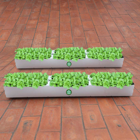 Vegetable gardening kits for Beginers - TrustBasket Flexible Grow Container for Leafy Vegetable (Set of 2)