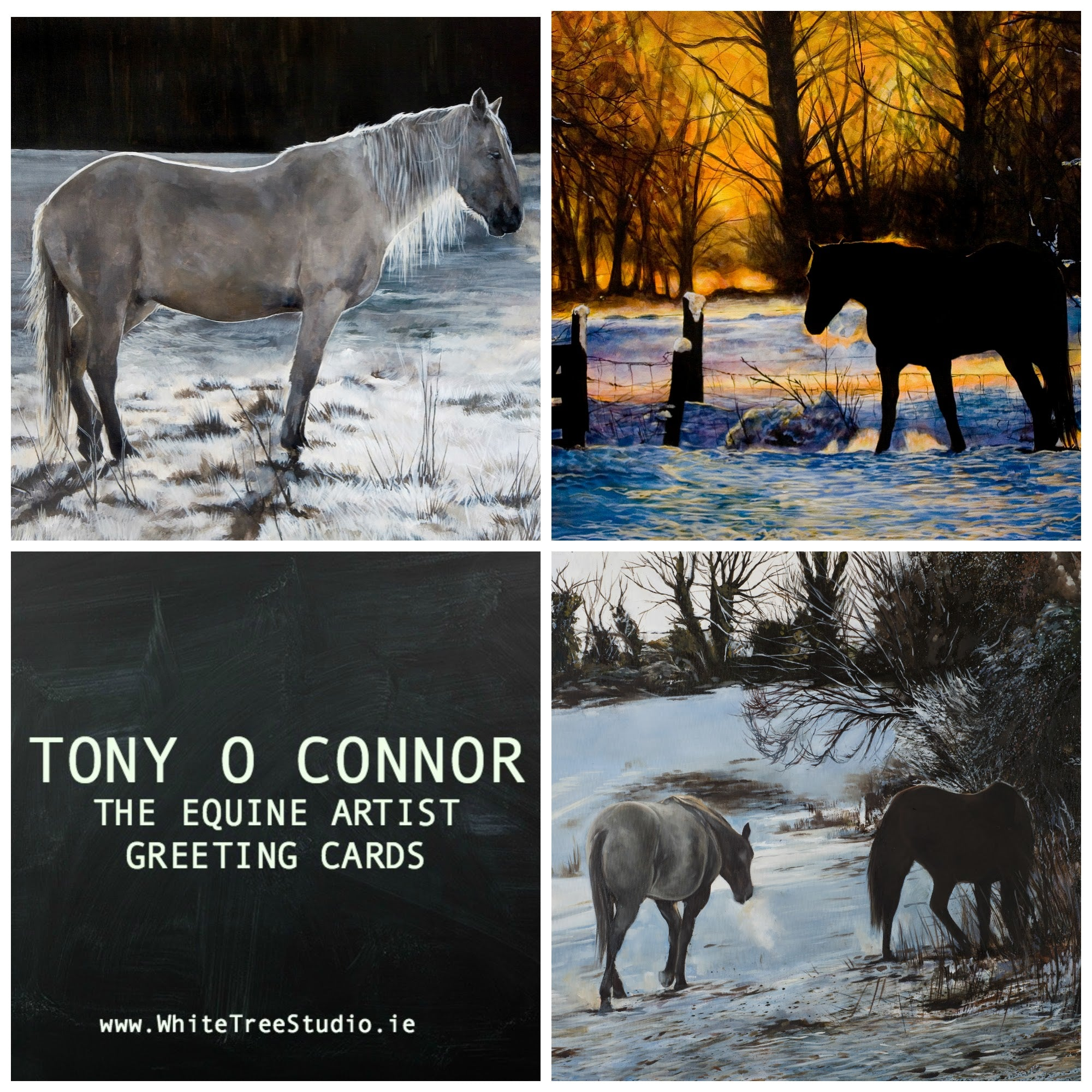 Tony o connor equine art greeting cards 6 pack tony oconnor tony o connor greeting cards 6 pack m4hsunfo