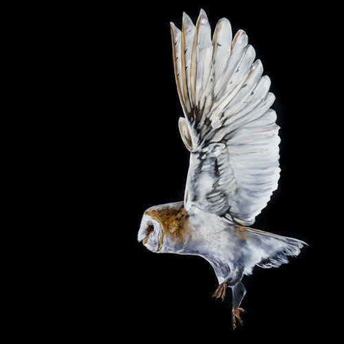 SPECIAL Ltd Ed Fine Art Giclée Print 'On Silent Wings'