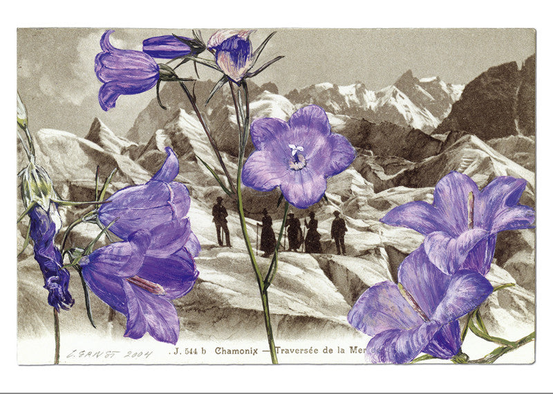 10503 -  Campanula  rotundifolia - Chamonix - Sea of ice