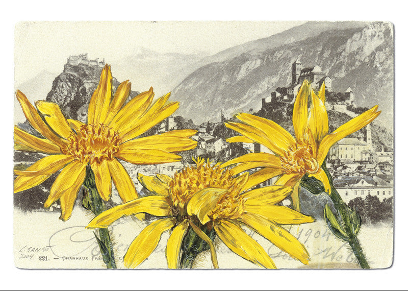 10504 - Arnica montana - Sion - Valère and Tourbillon