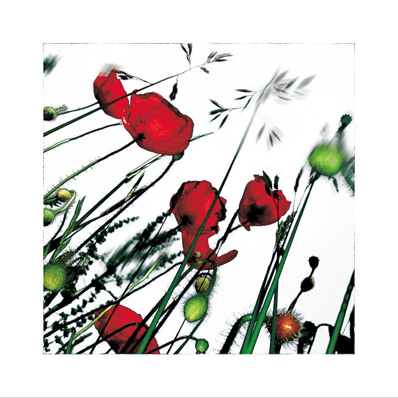 192 - Collection POPPY'S - L'HERBIER HUMEROSE
