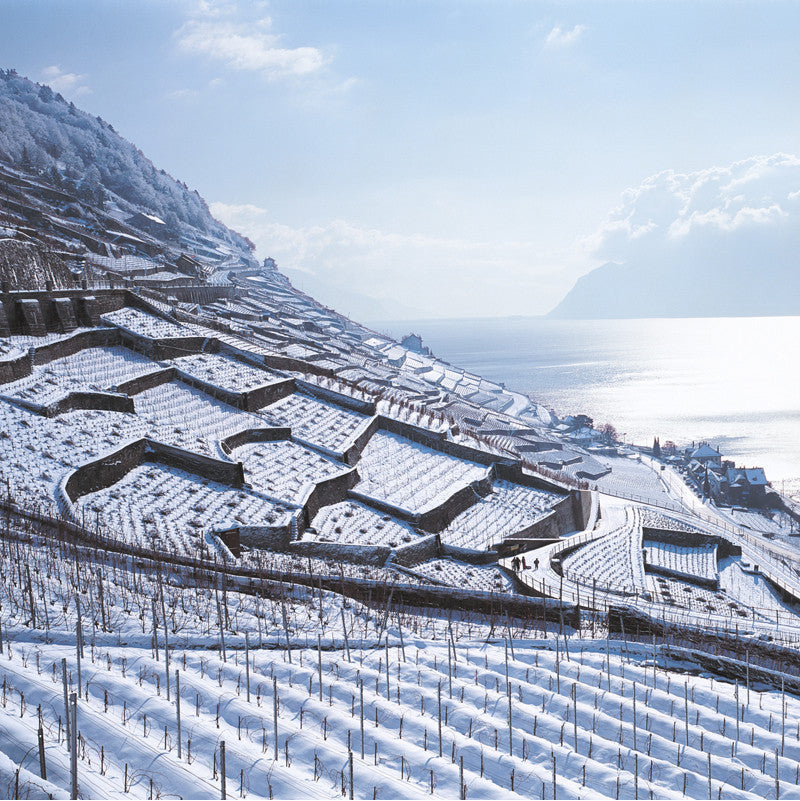 70094 - Lavaux - Vineyard Terraces, Switzerland