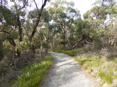 Bushland walks surrounding the Australian Garden, Cranbourne.