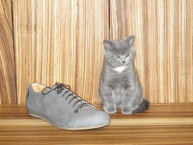 Ah grey kitty… how we enjoyed exploiting your good looks for fashion