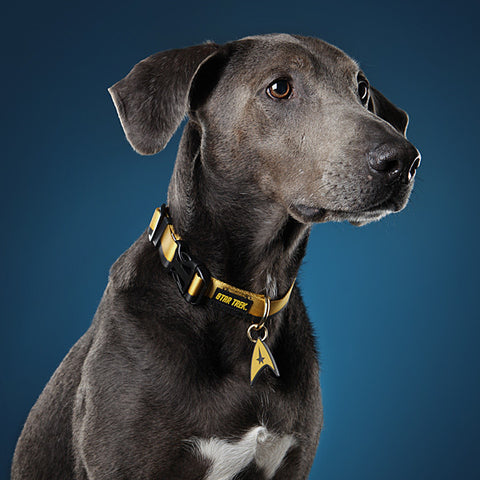 Star Trek Uniform Dog Collar Philippines