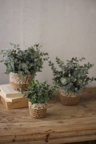Eucalyptus Plant in Woven Pot - Small - Out of the Woodwork Designs
