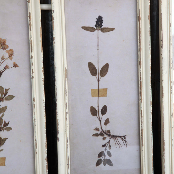 Pressed Botanical Framed Wall Decor