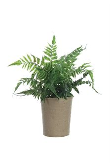Fern in Paper Pot - Out of the Woodwork Designs