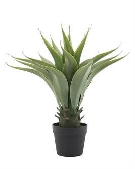 Agave Plant in Pot - Out of the Woodwork Designs