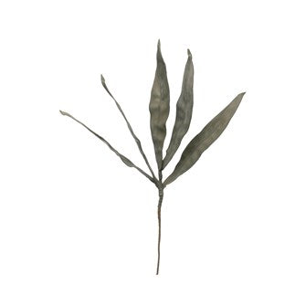 Reed leaf Stem