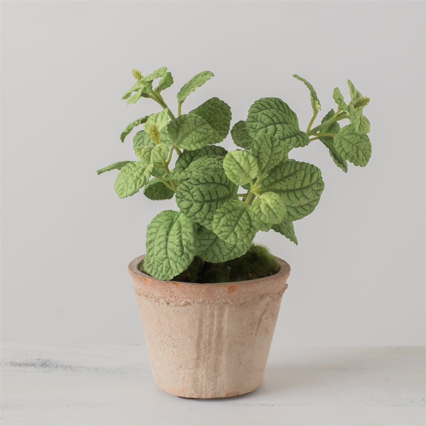 Mint Potted Plant