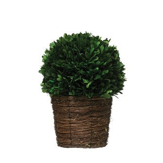 Preserved Boxwood In Woven Pot