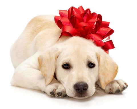 Stocking Stuffers for Pets