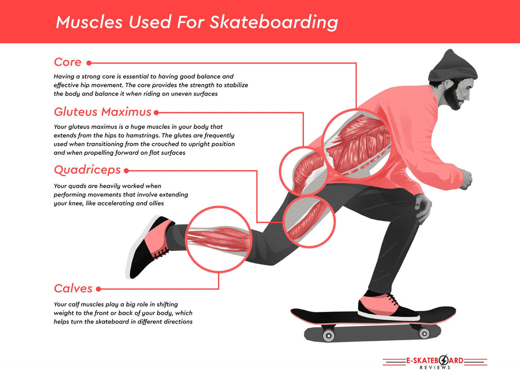 Muscles Used While Skateboarding