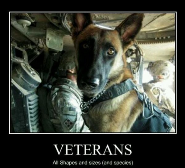 #NationalK9VeteransDay  Thank you for your service!