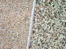 More about spelt - a beautiful ancient grain