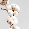 COMBED RINGSPUN COTTON