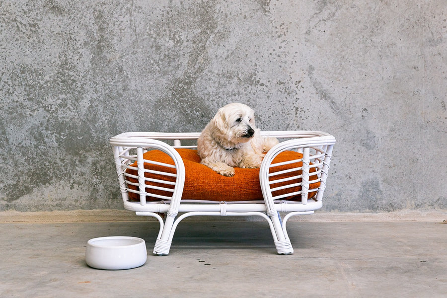 Mini Lounger Dog Bed (October)