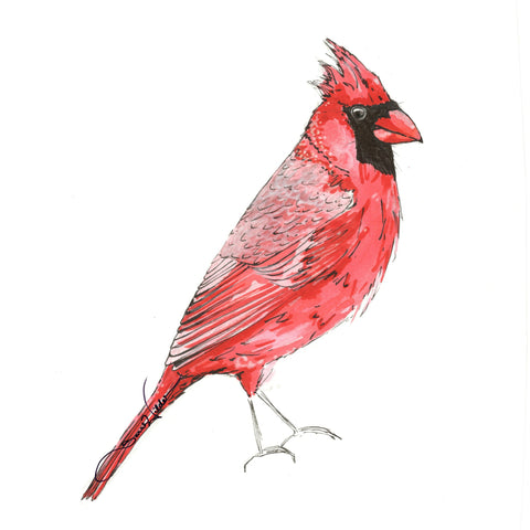 cardinal illustration by sarah wilder the fifth element life