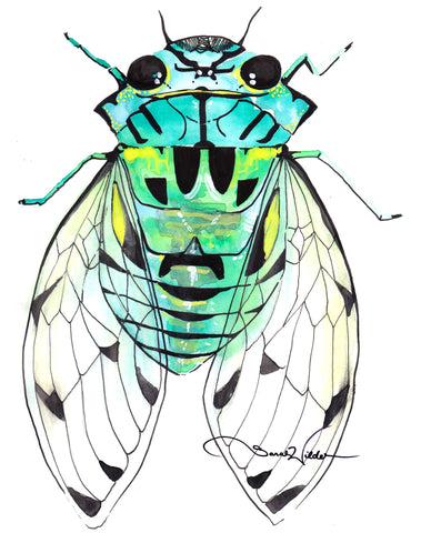 cicada illustration by sarah wilder the fifth element life