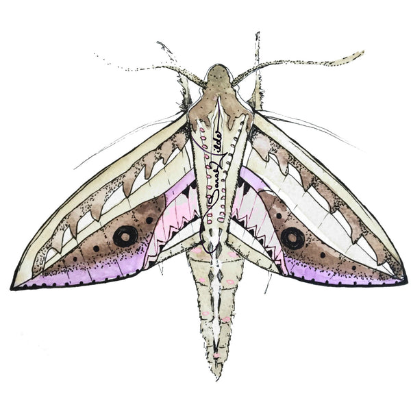 moth illustration sarah wilder the fifth element life