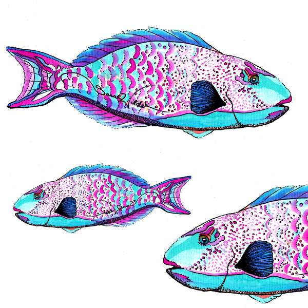 parrotfish illustration sarah wilder the fifth element life