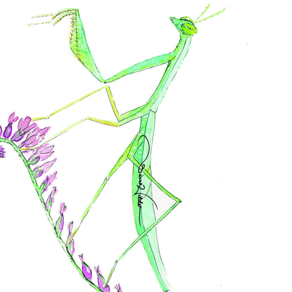 PRAYING MANTIS ILLUSTRATION SARAH WILDER THE FIFTH ELEMENT LIFE
