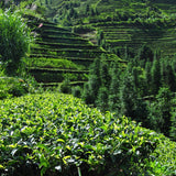 tea terraces