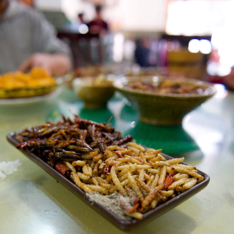deep fried bamboo worms