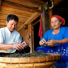 farmers processing tea