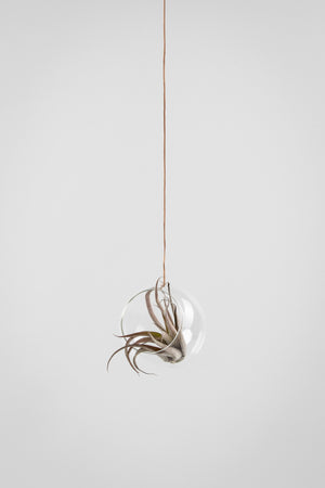 HANGING FLOWER/PLANT BUBBLE - TRANSPARENT (medium)