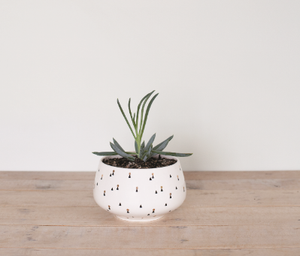 GEORGE +CO Lights Pattern Planter Small