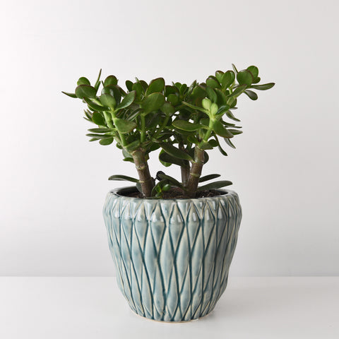 Glazed plant pot