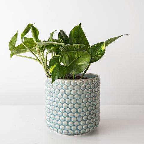 Dot textured large plant pot